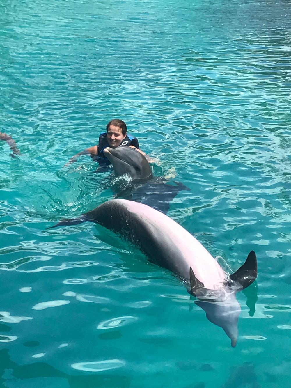 dolphin swim