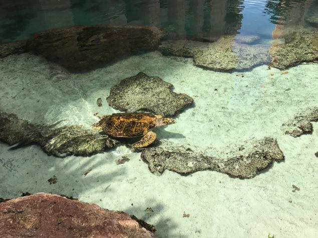free things to do, sea turtles, Atlantis, the bahamas, paradise island