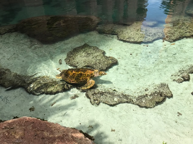 free things to do, sea turtles, Atlantis, the bahamas, paradise island